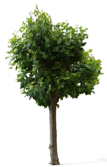 tree 23 3d model