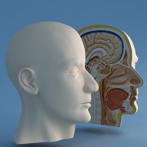 3dsmax correct head cutaway