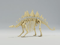 stegosaurus skeleton 3ds