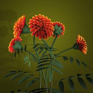 3d model marigolds flower pot pl