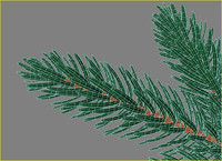branch of fir tree christmas