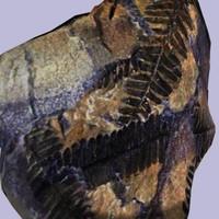 fossil fern 3d model
