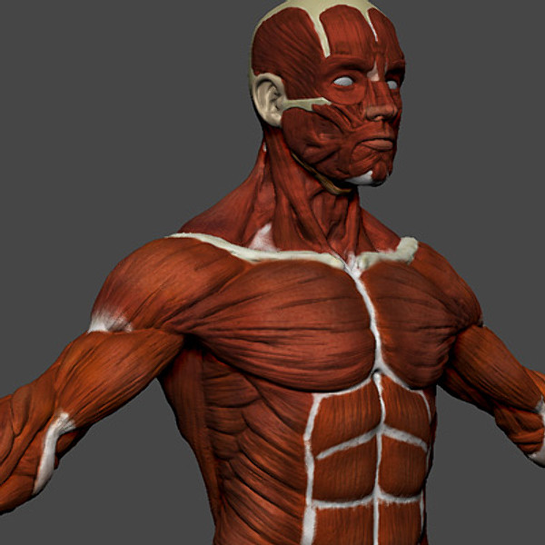 zbrush body 3d max