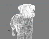 3d max boxer dog
