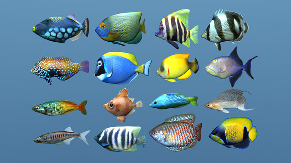 16 fish tropical 3d obj