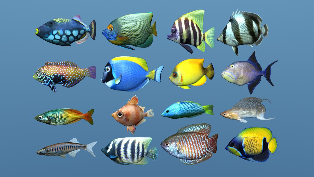 16 fish tropical 3d obj