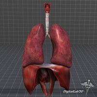 3d model of respiratory complete