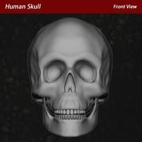 human skull modeled 3d model