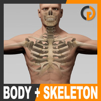 3d model of anatomically human male body skeleton