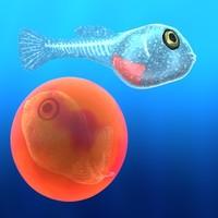 lwo fish fry egg