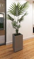 3ds max indoor palm plant