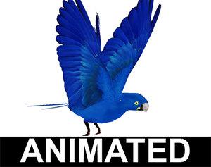 maya macaw blue
