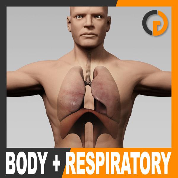 c4d anatomically human male body