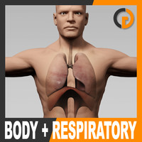c4d anatomically human male body