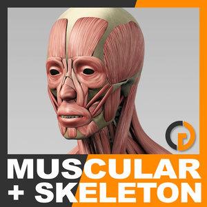 Turbosquid éducation MuscularSkeletonSkel_th01.jpg78be88d8-f949-433f-9d1e-537d2789cd01Res300