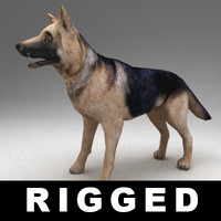 3d rigged german shepherd