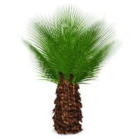 palm 3d max