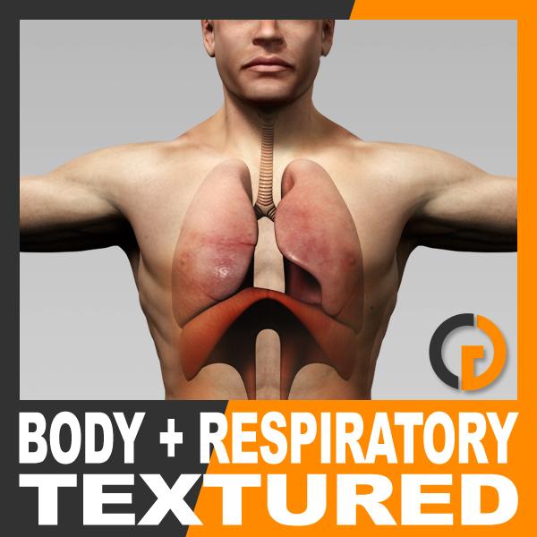 anatomically human male body 3d model