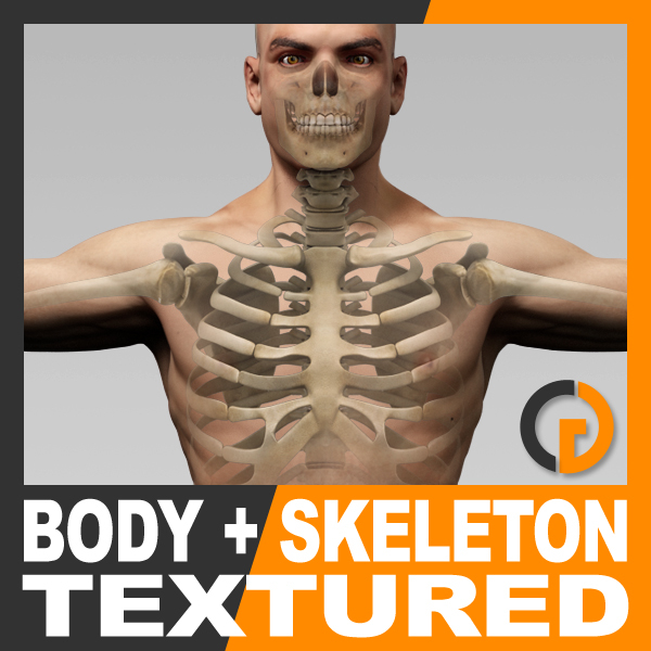 3ds anatomically human male body skeleton