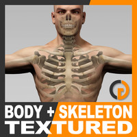 Human Male Body and Skeleton Textured - Anatomy