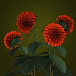 maya dahlias flower pot pl