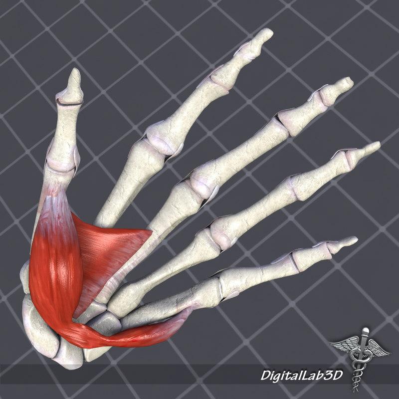 human hand 3d max