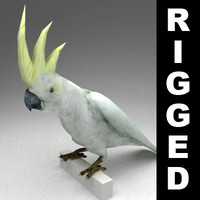Cockatoo lowpoly rigged