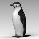 Chinstrap Penguin 3D models