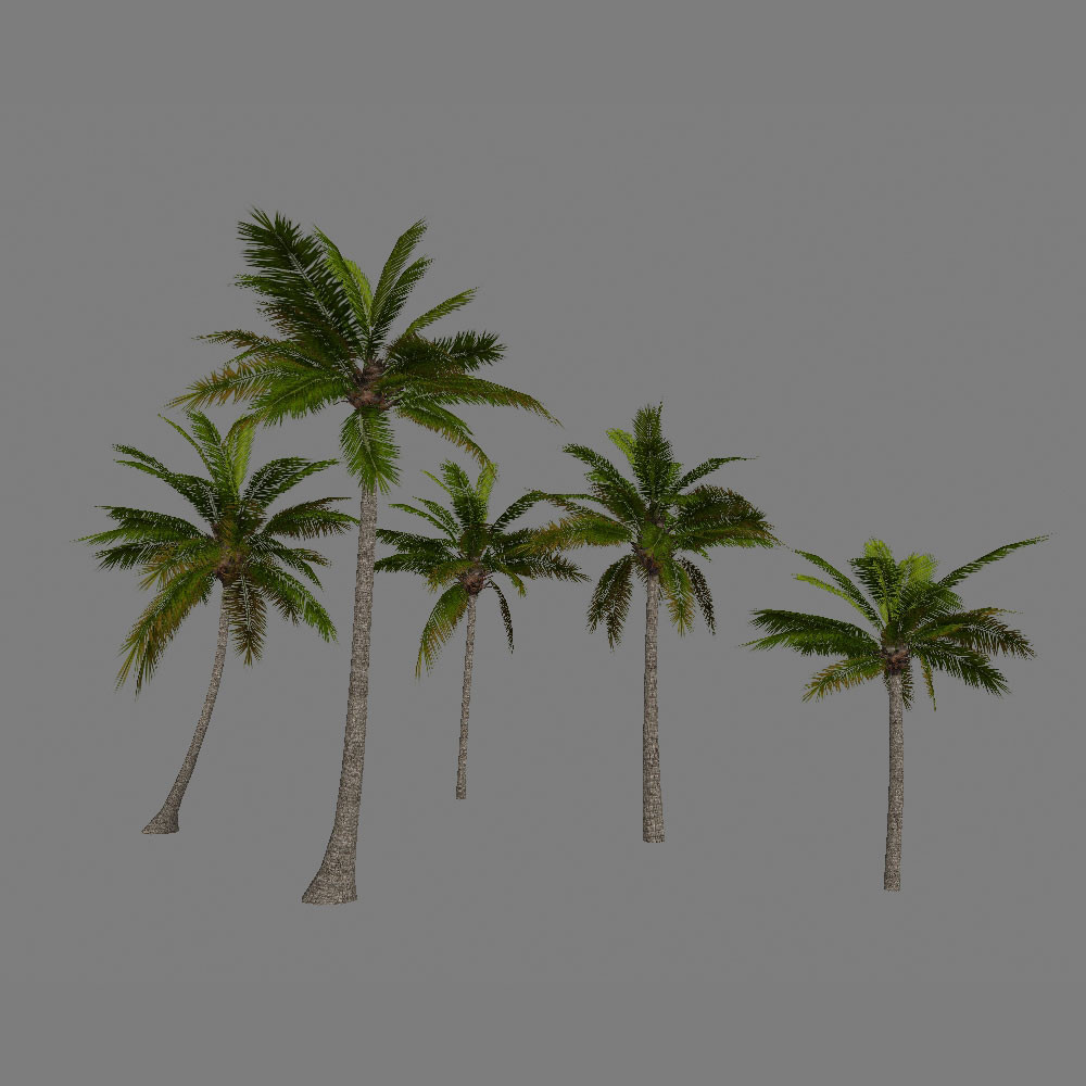 3d package palm trees model