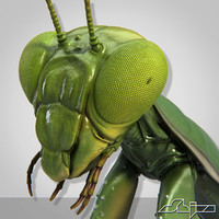Mantis Religiosa 1