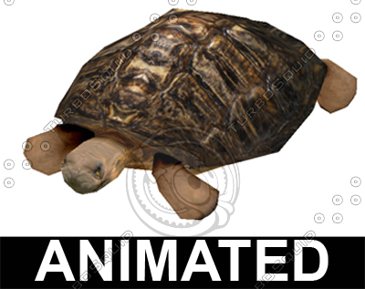 3ds max turtle tortoise