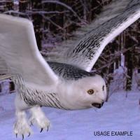 Snowy Owl Textured