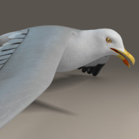 seagull standing wings 3d c4d