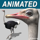 Ostrich 3D models