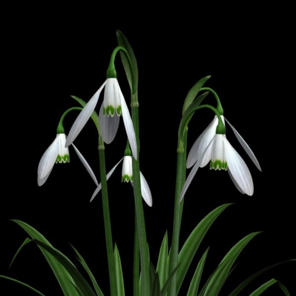 snowdrops flower pot pl 3ds