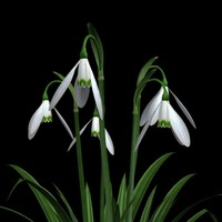 snowdrops flower pot pl 3ds