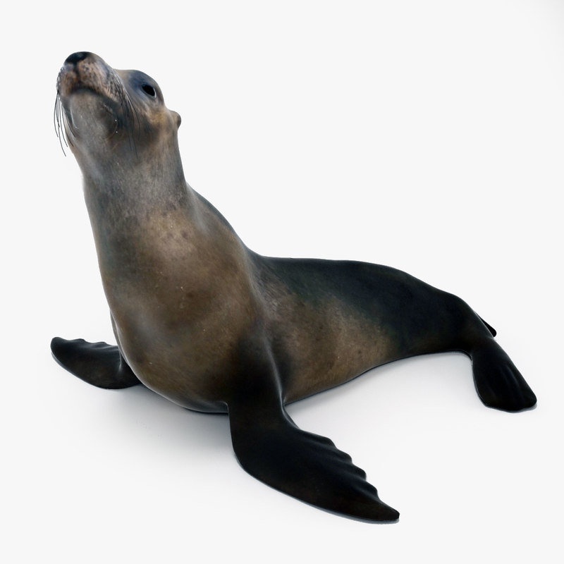 3d max seal scene ice