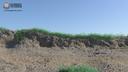 maya beach blowing grass