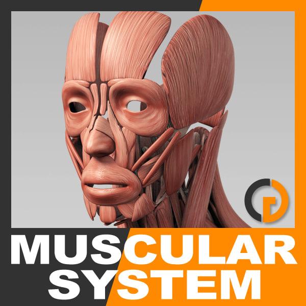 Muscular_th01.jpg