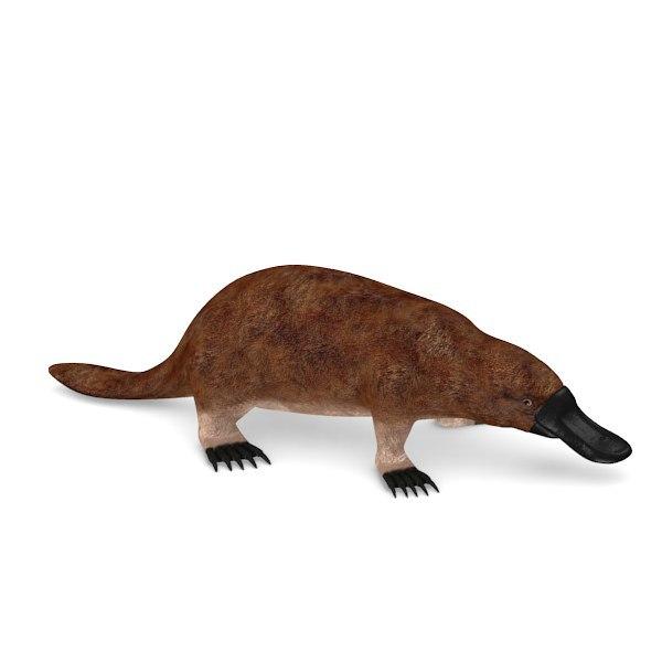 ornithorhynchus anatinus 3d obj