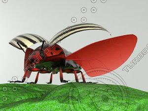 colorado potato beetle 3d model