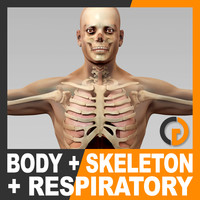 Human Male Body Respiratory System and Skeleton - Anatomy