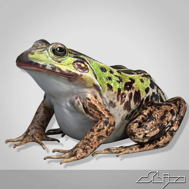 frog 2 3d model