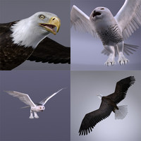3d snowy owl bald eagle model