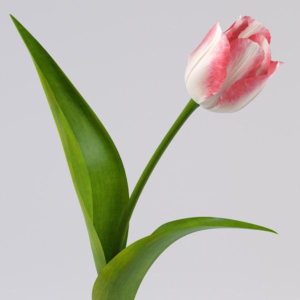 tulip 3d 3ds