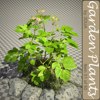 031_Potato Plant