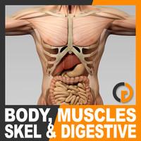 Cuerpo masculino masculino Sistema digestivo muscular y esqueleto - Anatomía