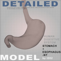 3d stomach medical digestive model
