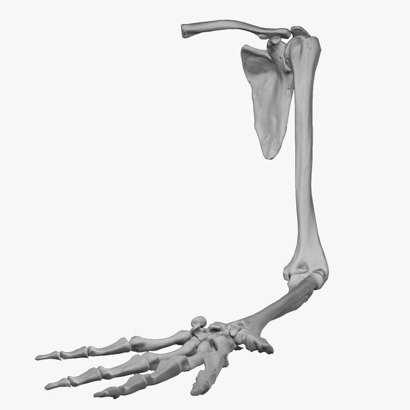 arm res 3d model