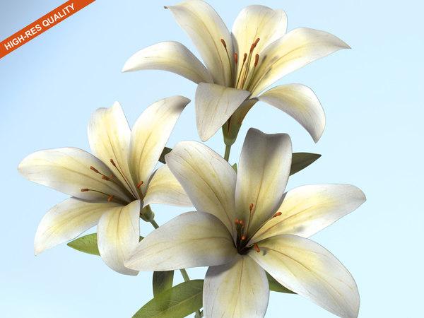 3d tiger lily